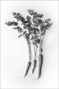 Three Carrots by Stan Farrow
